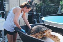 海龟医院Turtle Hospital是佛罗里达州马拉松Marathon的一家慈善机构,创办于198