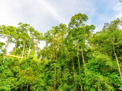 서쌍반나열대우림자연보호구
