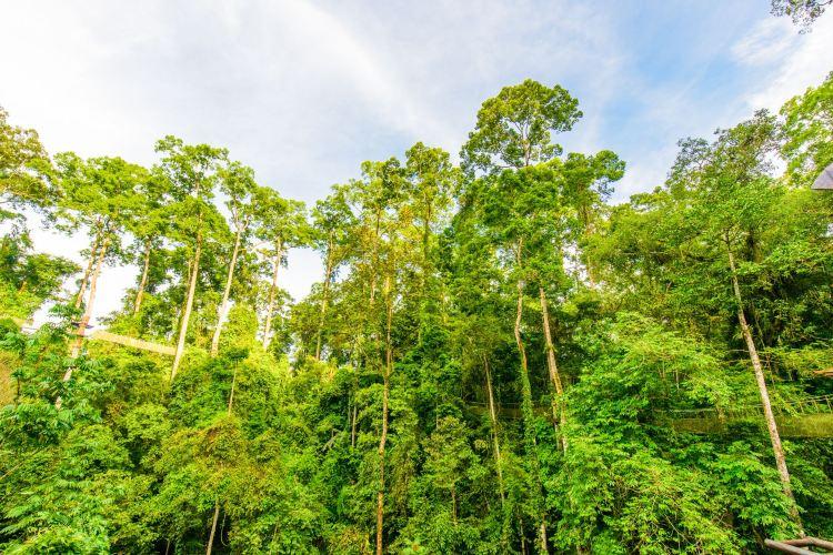 Xishuangbanna Tropical Rainforest Nature Reserve1