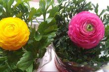 青州:博物馆——古城——花卉市场一日游,芹叶牡丹、漂亮的雏菊,美食美景,收获多多[愉快][玫瑰][太