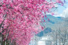 """又是樱花盛开的季节,整个空气中都弥漫着甜甜的花香。 朋友圈里开始了各种关于""""赏樱""""的旅行。 日本、杭"""