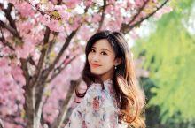 不去日本在大西安路边也能看到最美的樱花  又是一年的樱花季,朋友圈的各路达人和好友都纷纷晒樱花,大家