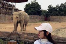 杭州野生动物园一日游 早上出门的时候还下着小雨,心想今天一定不好玩了,没多久雨停了,看到了好多的大型