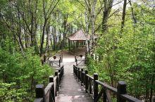 2019年5月18日到位于河北省石家庄市灵寿县的五岳寨景区游玩。步行上山,坐缆车下来,只走了小环线和