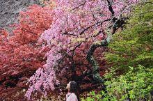 日本名古屋下吕小众景点丨下吕温泉合掌村 五一去的下吕,因为想着没有下雪没有到世界遗产白川乡的合掌村,