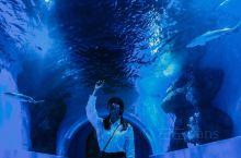 西北海洋馆-满足每个人都有的大海梦   世界上有20万种海洋生物,这个大型的海洋馆,满足了内陆人民对