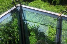 平时喜欢爬山锻炼的小伙伴可以考虑川西竹海,亲近大自然。吊桥,玻璃桥(没有特效的吓人)没有想象中那么吓