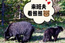 你好落基山 5月底 刚好熊熊冬眠醒来 一直有机会到十月份都可以邂逅熊熊哦  入夏的班夫国家公园 生机