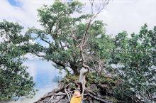 RUTUA,我最喜欢的,在瓦努阿图的,一个菲律宾人买下的私人小岛。这里的工作人员很热情好客,这里的食