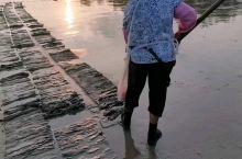 夕阳西下,在京岛金滩上,看京族大妈挖海螺。