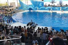 海豚馆和虎鲸馆的表扬很棒