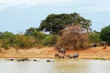 大象也许是斯里兰卡多种野生动物中最著名的,但实际上他们只充当了这一拥挤的生态舞台上的一份子。而斯里兰