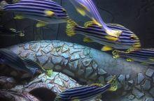 海南水族馆