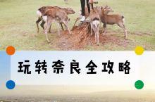 """奈良旅行【与小鹿有个约会】 奈良享有""""社寺之都""""的称号,被日本国民视为""""精神故乡""""。这里山岳性气候,"""