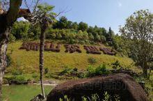 瑞山生态旅游度假村,位于大埔县洲瑞镇,景区群山连绵,生态环境保护得非常好,奇花异木繁多,空气富含负离