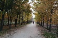 又是一年毕业季,秋天的银杏叶又黄喽,时光隧道,值得你来观光旅游哦