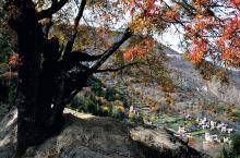 我没有骗你,四川丹巴的11月就是这样的景色,如果再不去看看,指怕又要等到明年了……  这里虽属于高海