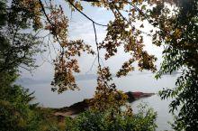 广东最美的秋天在那里?  河源万绿湖值得你探寻,每年的11月底至12月,黄绿相间的枫叶及各种原生灌木