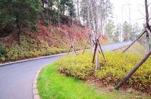 每次去吉水城北的杨万里公园,总能找到给你惊艳的地方!