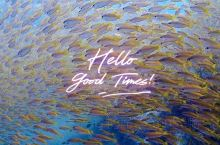 在普吉岛深潜考证,居然幸运的遇见了沙丁鱼风暴! 皮皮岛潜水以深潜水体验为主,也就是不需要专门考潜水证