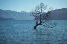 瓦纳卡湖 著名的孤独的树 多年来独自一树长在湖中 茕茕孑立 形影相吊 吸引诸多游客慕名前来拍照 一不