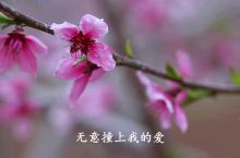 翁源县地形是一个藏风聚气之宝地,说到三华李,提到兰花,讲到中国九仙桃之乡非翁源为首不可。如今,到了仲