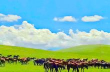 山丹军马场 山丹军马场自由行攻略  山丹军马场是亚洲最大的马场,世界排名第二,古代是汉武帝屯兵养马的