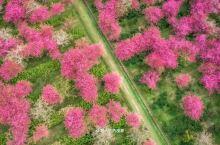 交给了骑行的春天,在莫干山遇到半山的茶田与满树的桃花。茶农正忙着采茶,每个人脸上都露着丰收的的喜悦。