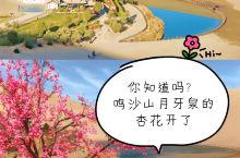 你知道吗?鸣沙山月牙泉的杏花开了  武汉解封了,中国的春天到来了,国人憧憬自由的心可以蠢蠢欲动了。