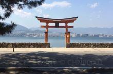 [在宫岛找到鸟居门!  !  ]  现在,您无法直接看到宫岛的Otorii,因为Reiwa大型翻新工