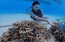 有一种生活叫做深深太平洋海底潜潜水玩玩游艇潜水艇飙飙车开开波音………