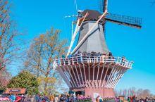 请将一个春天留给荷兰——库肯霍夫公园  春天是一年的开端,是四季中我认为最美丽的一个季节,而荷兰的春