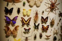 我在这里#  蒙特利尔昆虫馆   北美洲独一无二的昆虫馆 位于蒙市植物园内 外形设计就像一只昆虫 场