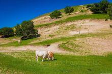 乌兰布统之马牛羊