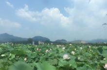 到广州花都来,要看资政大夫祠,花都区新八景之一,位于广州市花都区新华镇三华村的西面,紧靠广清高速公路