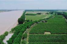 被夏风吹绿的黄河两岸