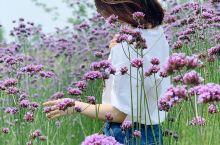 炎炎夏季的周末 走哪看哪 各色小花美美惹人爱 树荫下乘凉吹吹风 喝喝咖啡惬意