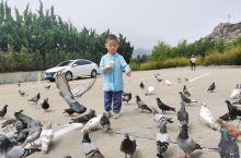 不错的,孩子玩的很开心,可以喂动物。
