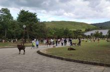 奈良公园掠影