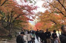 爱知县丰田市。很有名气的红叶观赏地。推荐一下