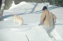#好大的雪# 大雪过后,一片雪白的世界;街上人很少,温度依然在零下。忽然看到一位老爷爷牵着狗狗,从家