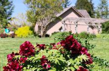 贝尔维尤植物园—美国最美的植物园 Bellevue Garden是威尔伯顿山公园Wilburton
