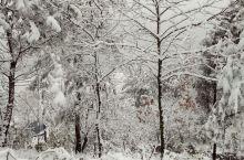 商城下雪了,好美啊