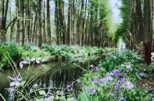 李中水上公园—大自然的天然氧吧 林中有水、水中有鱼、林中有鸟、河流回环、水杉林立不仅有如此美景,猫头