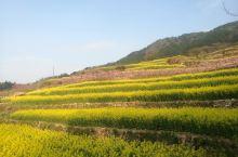 春风回暖,千岛湖每年三月中旬到四月初的油菜花是开的最好的时候。漫步在山间小路,村前屋后,山坡岭脚,金