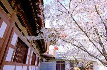 春天是踏青赏花最好的时节。而樱花是春天开的最艳丽最浪漫的花朵。青龙寺的樱花可以说是近年的爆款,每年的