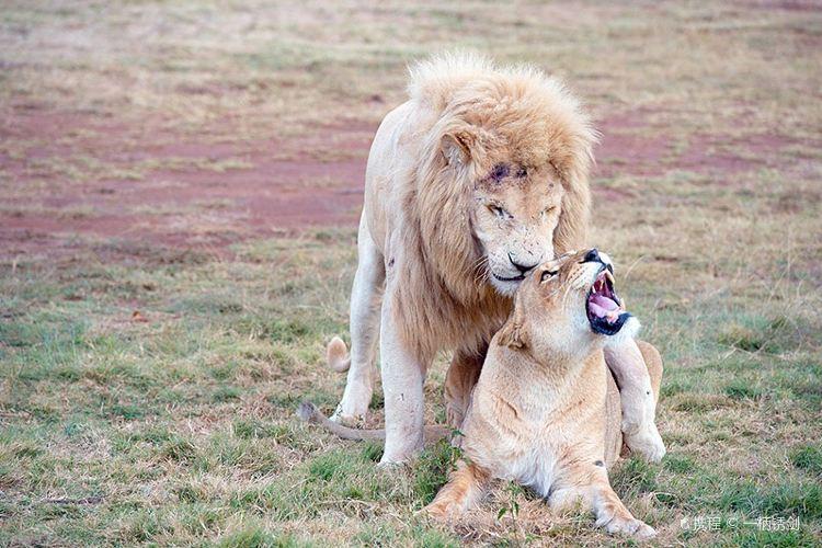 Lion & Safari Park4