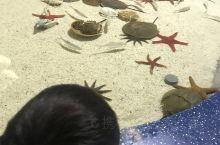 六一嘛来的海洋馆 跟上海水族馆 萧江极地海洋世界不一样 各有各的特色吧