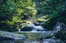 绿野仙踪般奇妙林地,绿色而养眼  听朋友们推荐白谷云水峡,我和闺蜜便在假期时候来到了这里一探究竟。