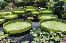 长木花园有悠久的历史,于1700年这园地由当时的基督教贵格派威廉彭出售给皮尔斯家族。皮尔斯家人开始在